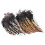 Coq de Leon Pardo Feathers