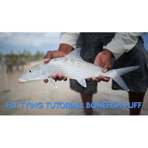 Vliegbinden: Bonefish Puff Video