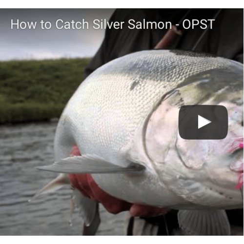 How to catch Silver Salmon?