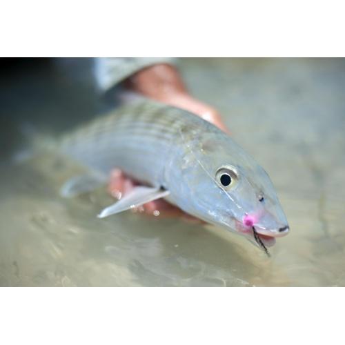 Bonefish #2