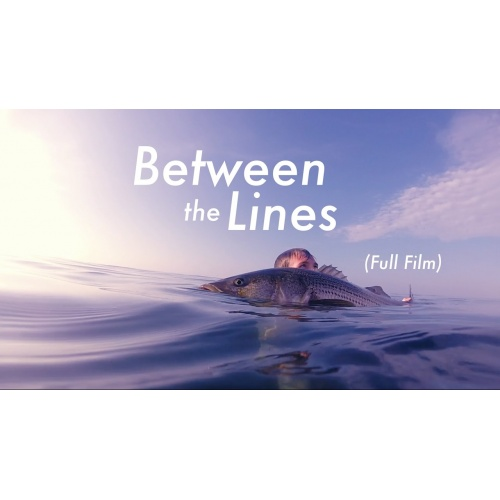 Fly Fishing for HUGE Striped Bass